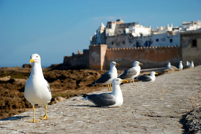 DEN > Casablanca + 7 nights: $976