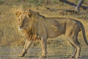HOU > Durban, South Africa: $962 round-trip – Dec-Feb (Including Winter Break)