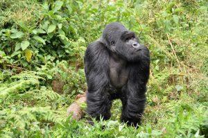 RDU > Kigali, Rwanda: Flight & 5 nights: $1,245 – Nov-Jan