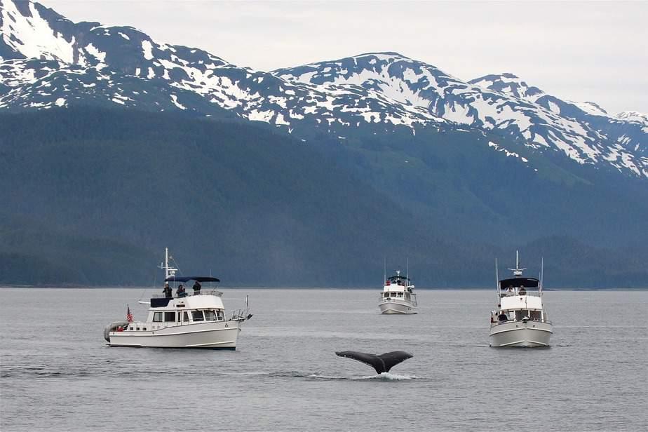 SEA > Fairbanks, Alaska: $254 round-trip – May-Jul (Including Summer Break)