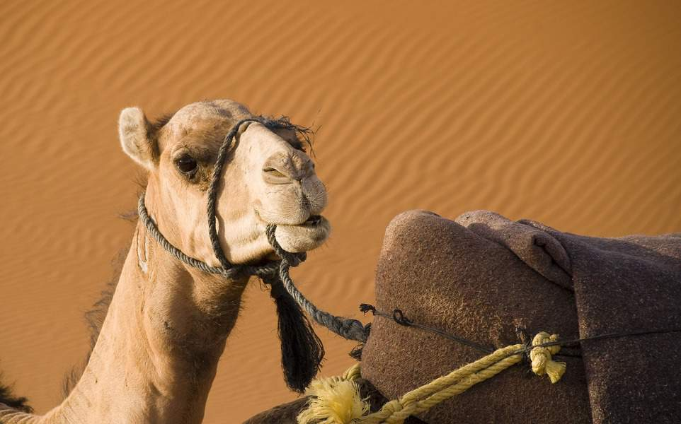 EWR > Marrakesh, Morocco: $389 round-trip- Oct-Dec (Including Thanksgiving)