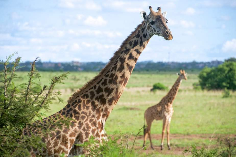 DEN > Nairobi, Kenya: Flight & 14 nights: $894- Sep-Nov (Including Fall Break)