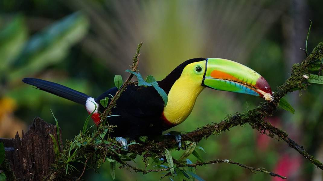 MSP > San Jose, Costa Rica: Flight & 8 nights: $1,096- Mar-May