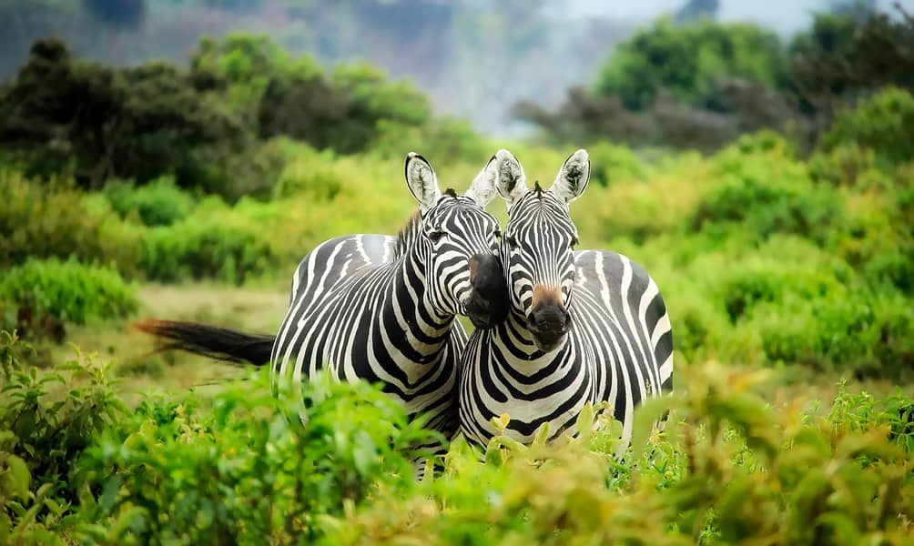 SEA > Nairobi, Kenya: From $578 round-trip – Dec-Feb