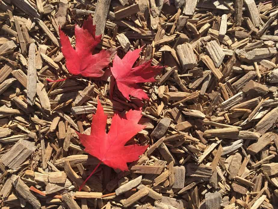 IND > Toronto, Canada: From $221 round-trip – Nov-Jan *BB