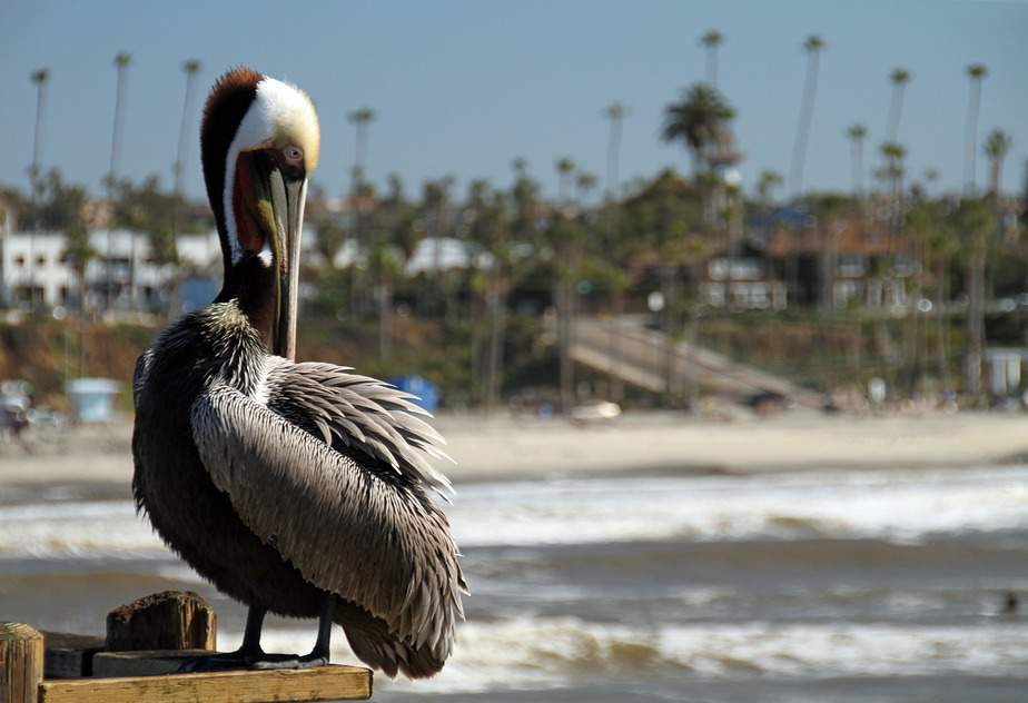 IND > San Diego, California: $168 round-trip – Jan-Mar (Including President's Day Weekend)