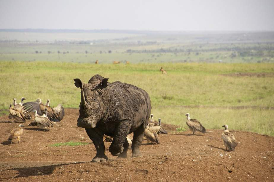 DEN > Nairobi, Kenya: From $587 round-trip – Nov-Jan